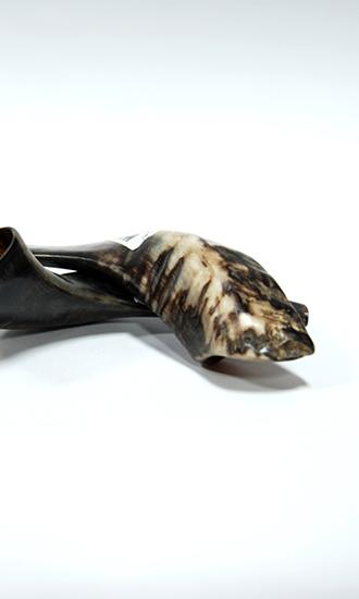 Shofar Ram Horn small size